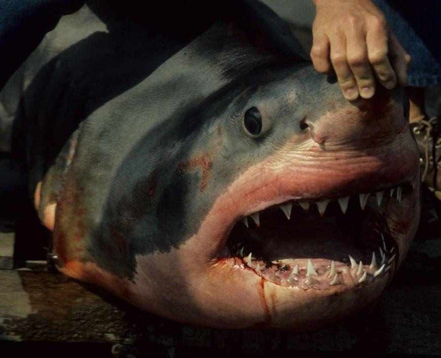 shark's teeth om nom nom