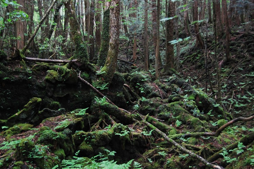 If Mount Fuji erupts, Aokigahara Forest might stop being what some people call the Suicide Capital of the World